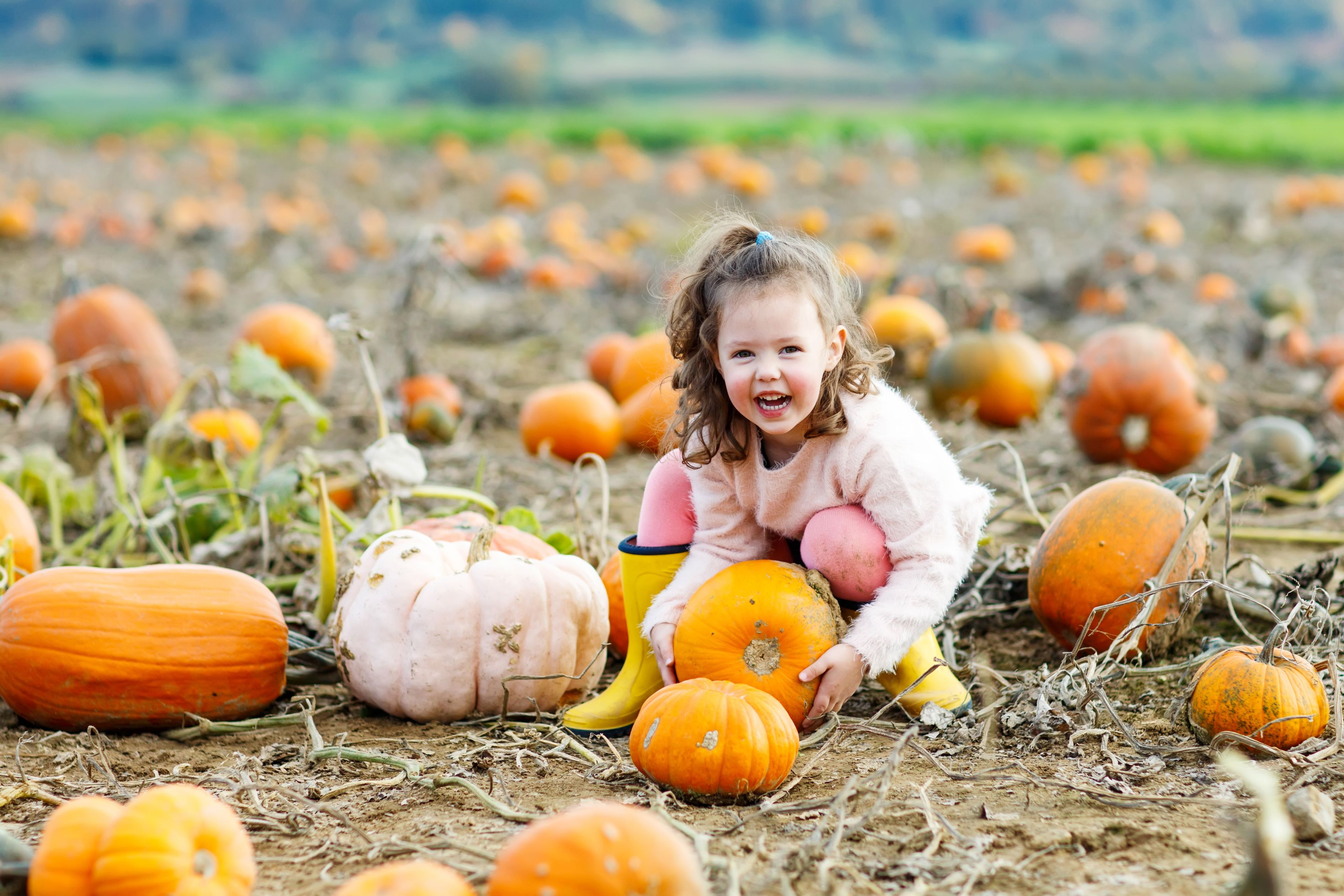 Fall Family Fun Starts at the Pumpkin Patch!