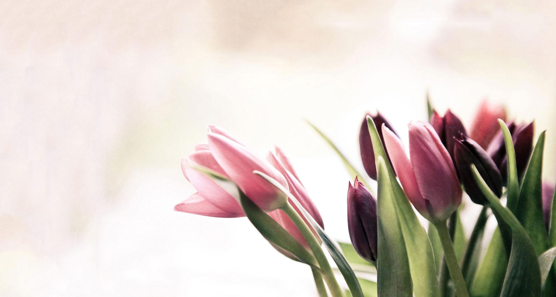 Spring has Sprung 3